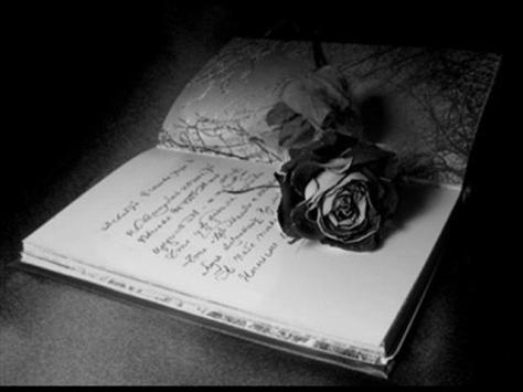 Rose & Words